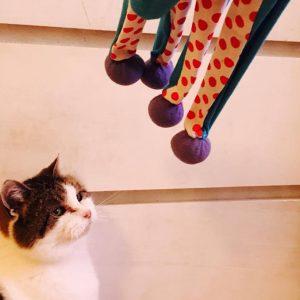Kattenspeelgoed,bewegende, bewegen, kat, katten, speelgoed, hand